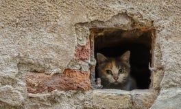 Gato que inclina-se fora de um furo imagem de stock royalty free