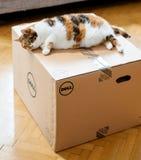 Gato que inspeciona a caixa de cartão de Dell Computer imagens de stock