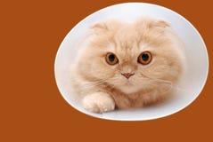 Gato que intenta subir a través de un túnel. Imágenes de archivo libres de regalías