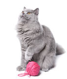 Gato que joga com o clew isolado Fotografia de Stock