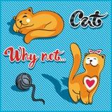Gato que joga com uma bola e um gato do sono Imagem de Stock Royalty Free