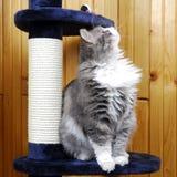 Gato que joga em um cat-house imagem de stock