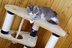 Gato que joga em um cat-house enorme fotos de stock royalty free