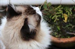 Gato que joga no quintal fotos de stock