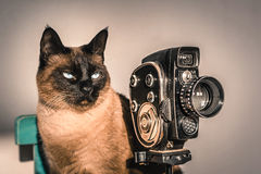 Gato que joga o realizador de cinema Foto de Stock