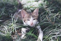 Gato que juega alrededor en un campo imágenes de archivo libres de regalías