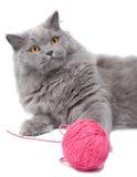 Gato que juega con el ovillo   Foto de archivo libre de regalías