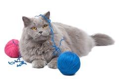 Gato que juega con el ovillo aislado Foto de archivo libre de regalías