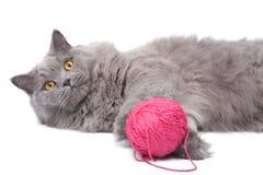 Gato que juega con el ovillo aislado Fotografía de archivo libre de regalías