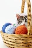 Gato que juega con hilado Imagen de archivo libre de regalías