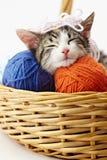 Gato que juega con hilado Imagenes de archivo