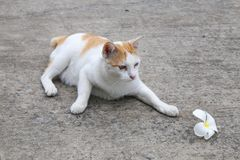 Gato que juega con la flor Foto de archivo libre de regalías