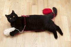 Gato que juega con las cuerdas de rosca Foto de archivo