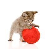 Gato que juega con una bola Aislado en el fondo blanco Imagen de archivo