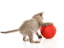 Gato que juega con una bola Aislado en el fondo blanco Fotografía de archivo libre de regalías