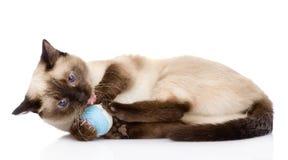 Gato que juega con una bola En el fondo blanco Imagen de archivo