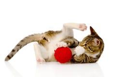 Gato que juega con una bola En el fondo blanco Foto de archivo
