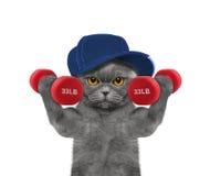Gato que juega deportes con pesas de gimnasia Fotos de archivo