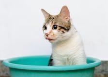 Gato que juega en bandeja Fotografía de archivo