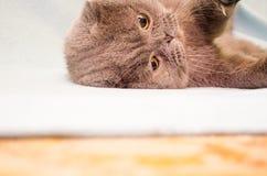 Gato que juega en el piso Foto de archivo