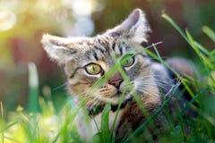 Gato que juega en hierba Imagen de archivo