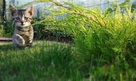 Gato que juega en la hierba Fotografía de archivo