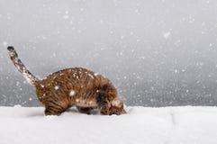 Gato que juega en nieve Fotografía de archivo