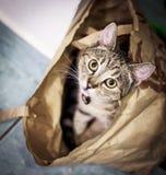 Gato que juega en una bolsa de papel Imagen de archivo