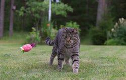 Gato que juega en una hierba Imágenes de archivo libres de regalías