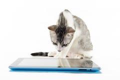 Gato que lê uma tabuleta digital fotografia de stock