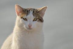 Gato que le mira Fotografía de archivo
