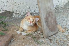 gato que lo rasguña uno mismo en la tierra Foto de archivo