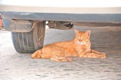 Gato que miente bajo el coche bajo el coche Imagen de archivo libre de regalías