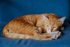 Gato que miente en el amortiguador Imagen de archivo