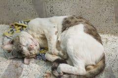 Gato que miente en el banco con las heridas y enfermedad fotografía de archivo