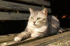 Gato que miente en el banco del jardín Imagen de archivo
