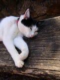 Gato que miente en el banco fotografía de archivo libre de regalías
