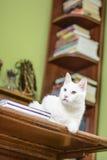Gato que miente en el escritorio Foto de archivo libre de regalías