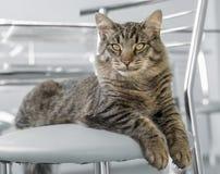 Gato que miente en el sofá Imagen de archivo libre de regalías