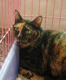 Gato que miente en jaula en hospital veterinario Fotos de archivo