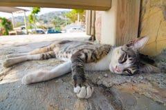 Gato que miente en la calle Foto de archivo libre de regalías