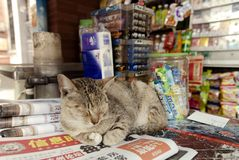 Gato que miente en un contador del quiosco del soporte de periódico imagen de archivo libre de regalías