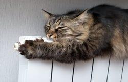 Gato que miente un radiador caliente Imagen de archivo libre de regalías
