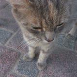 Gato que mira abajo Imagen de archivo