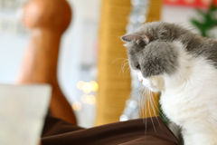 Gato que mira abajo al lado Fotografía de archivo
