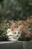 Gato que mira de detrás la planta Imagen de archivo libre de regalías
