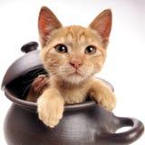 Gato que mira de una cacerola de arcilla Fotos de archivo libres de regalías