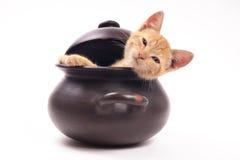 Gato que mira de una cacerola de arcilla Imagen de archivo
