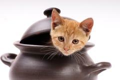 Gato que mira de una cacerola de arcilla Imagenes de archivo