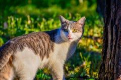 Gato que mira detr?s El gato que camina y que mira detrás para no será notado fotos de archivo libres de regalías